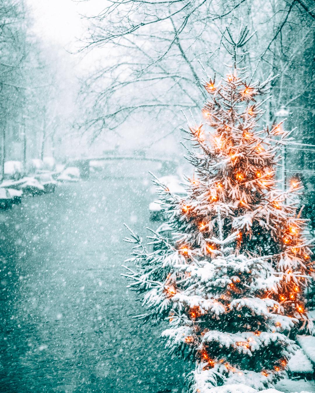 Christmas tree in Amsterdam