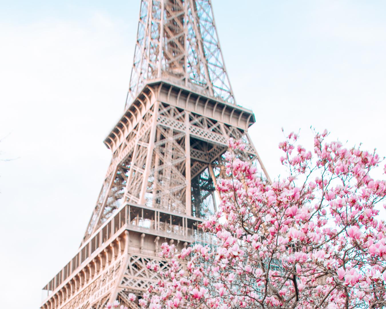Blossoms in Paris