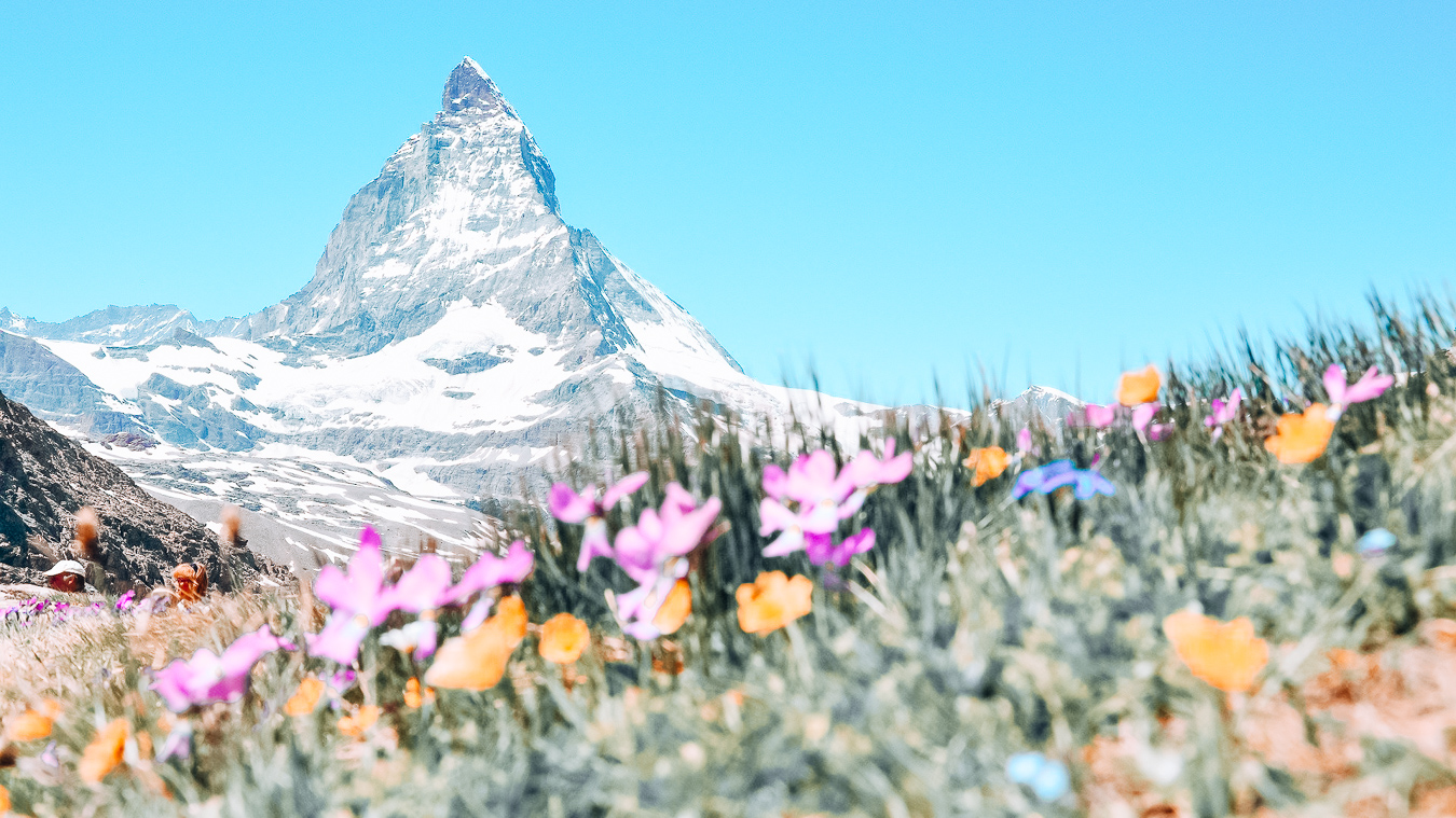 Flowers and a mountain