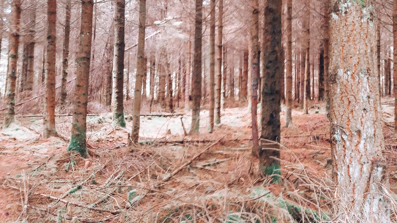 Woods in La Roche-en-Ardenne in autumn