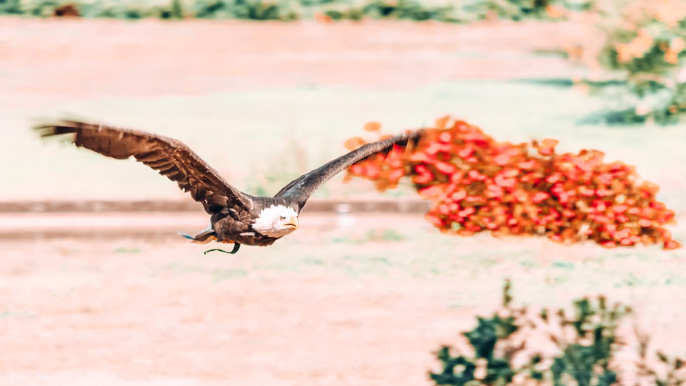 Bird in Weltvogelpark Walsrode