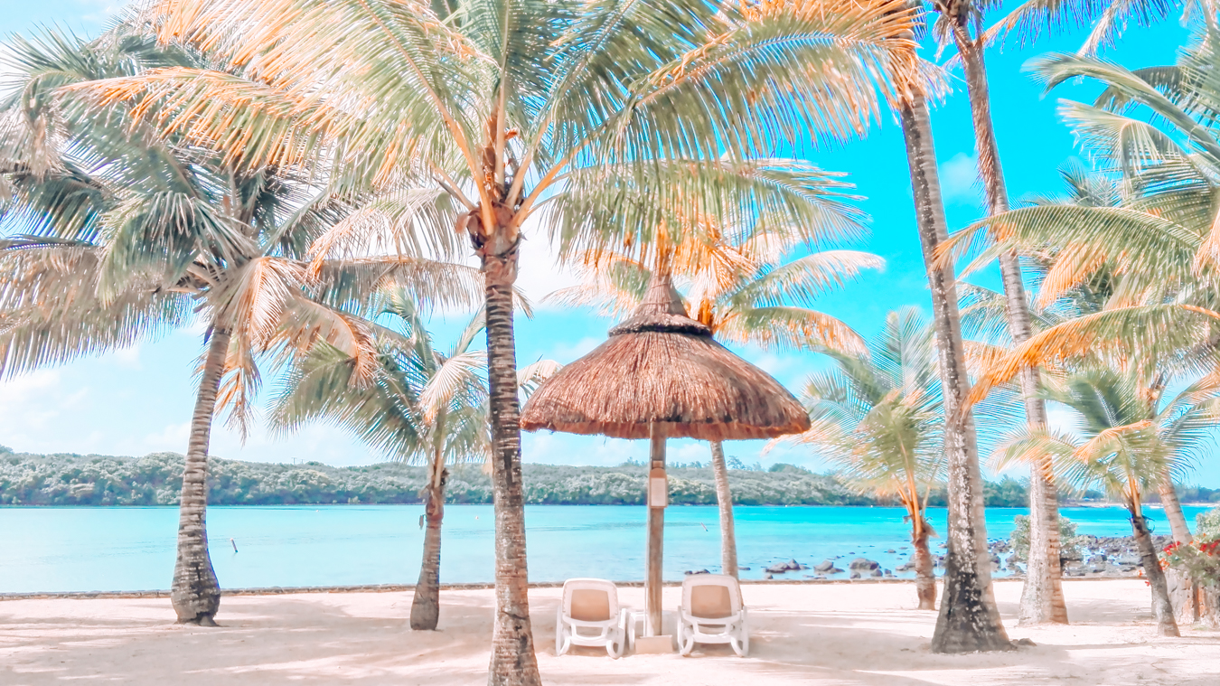 Palm trees in Mauritius