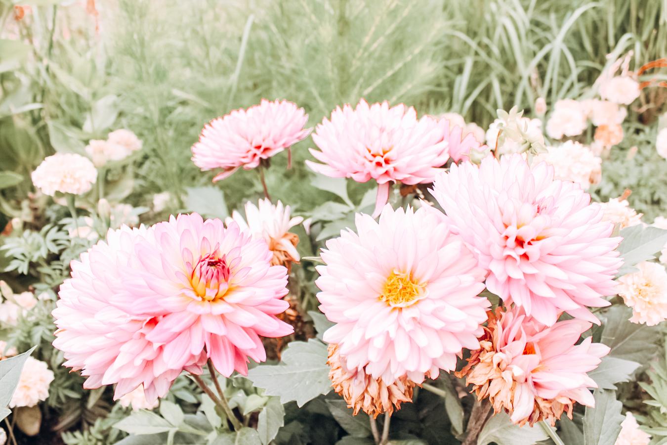 Flowers at Denver Botanical Garden