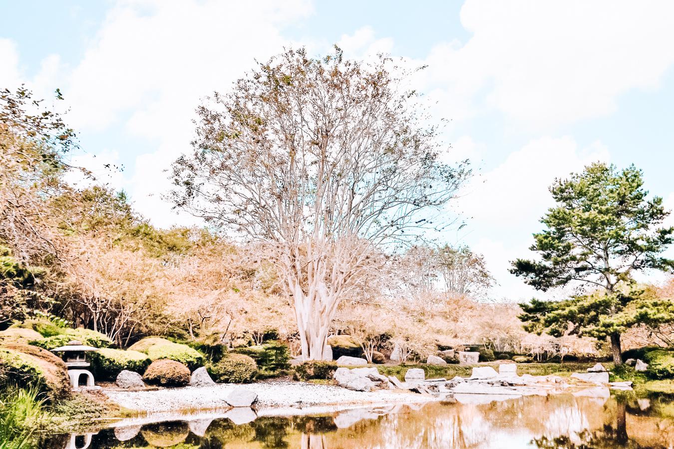 Japanese Garden in Houston