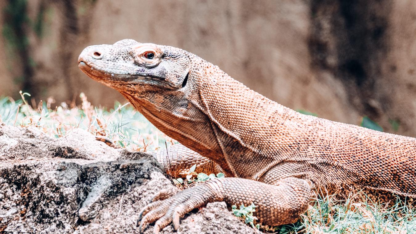 Animal at Memphis Zoo