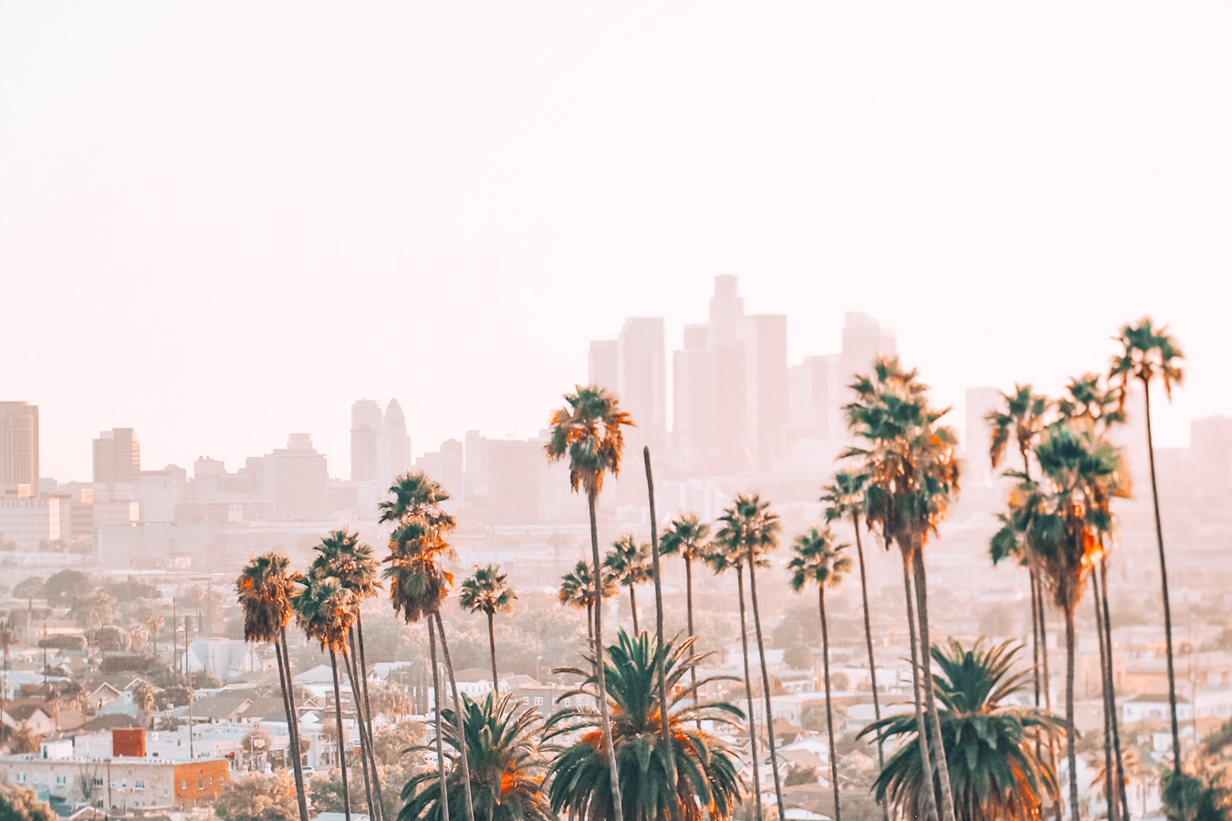 Palm trees and buildings in LA