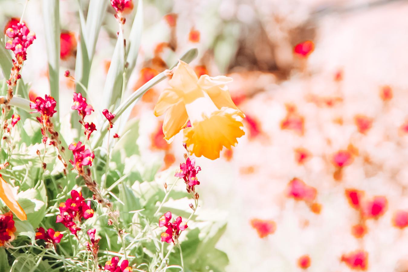 Flowers at the San Antonio Botanical Garden