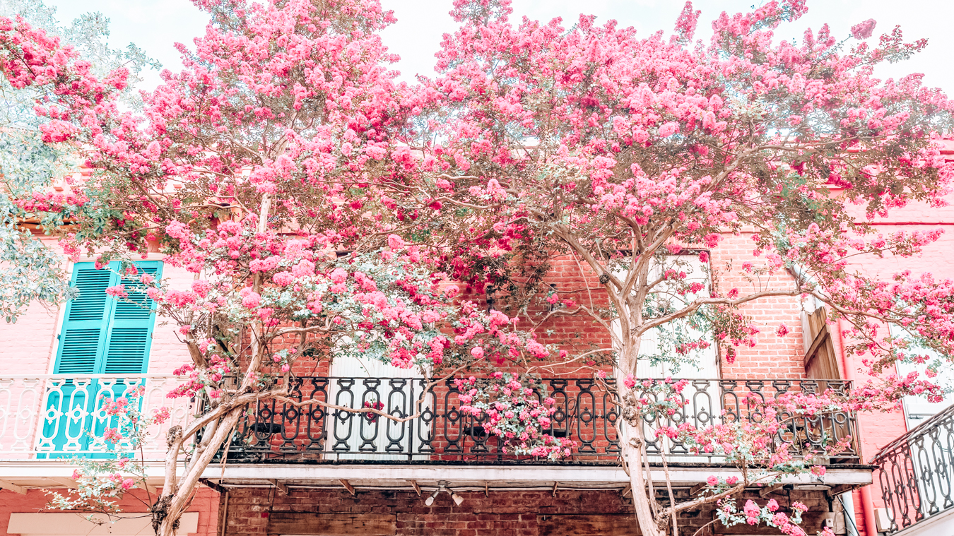 Building with pink flowers in New Orleans