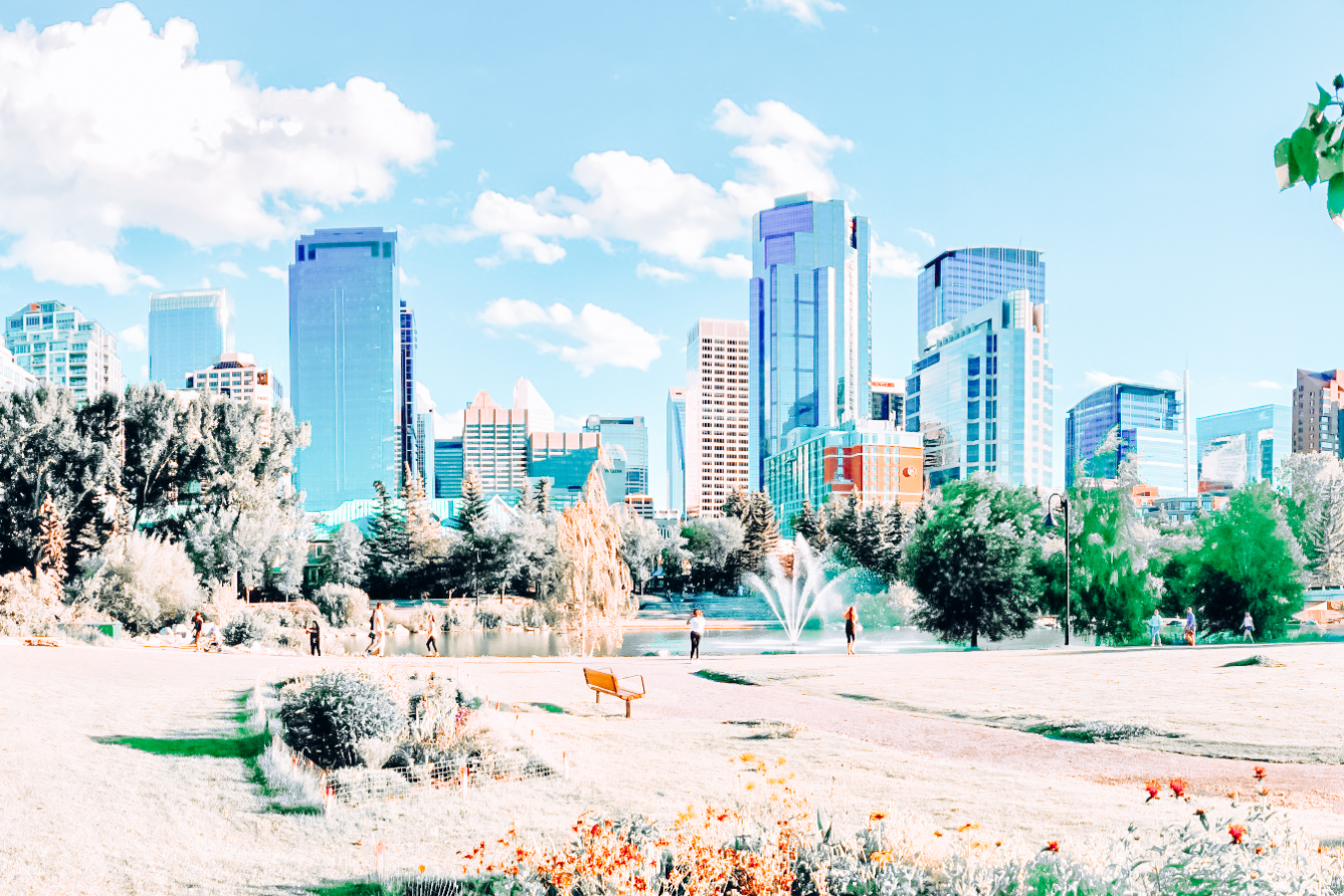 Grass, trees, and buildings in Calgary
