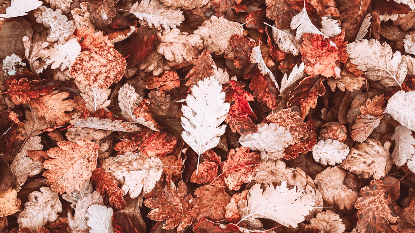 Leaves in Hoyt Arboretum
