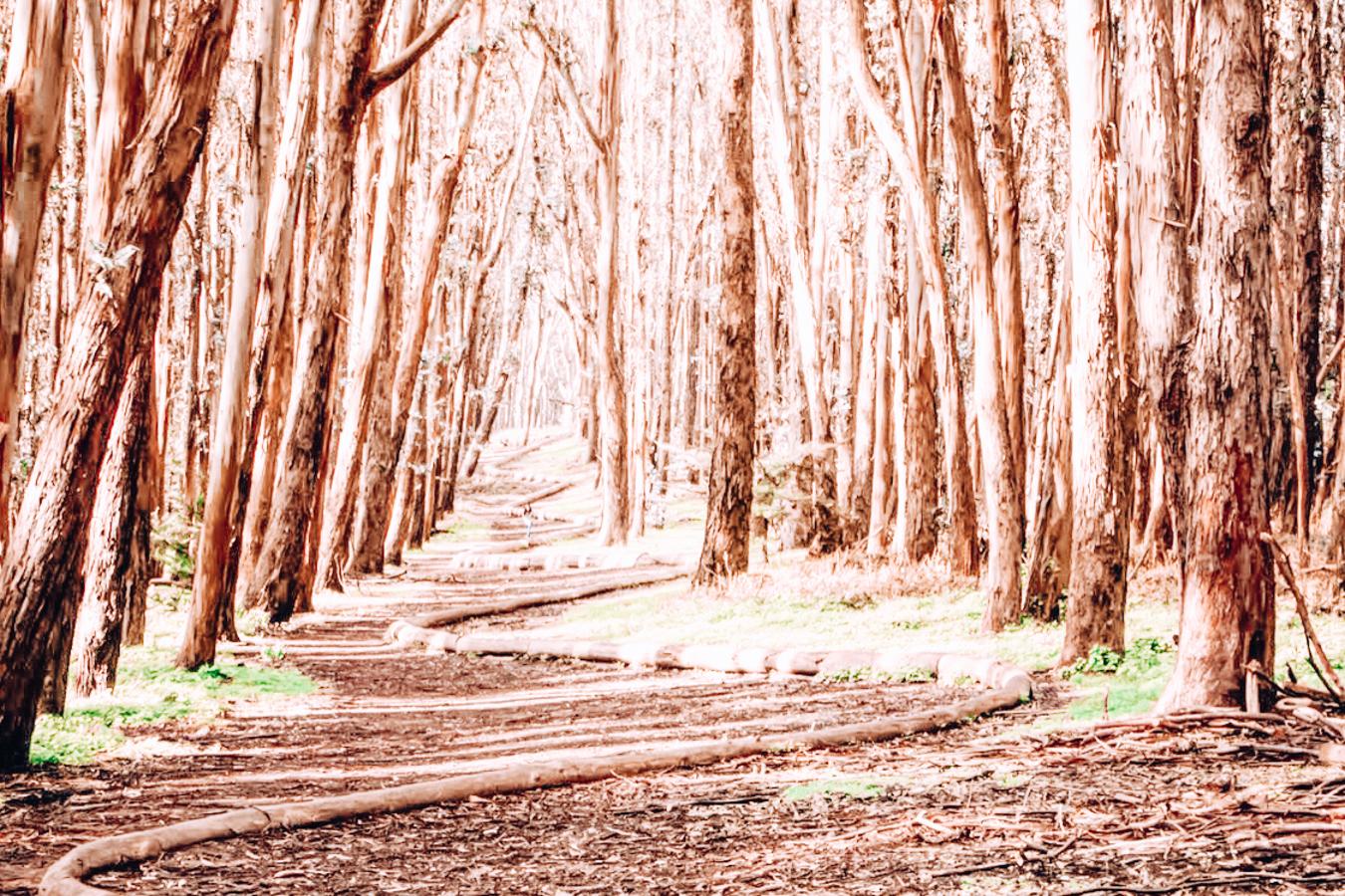 Lover's Lane Trail in San Francisco