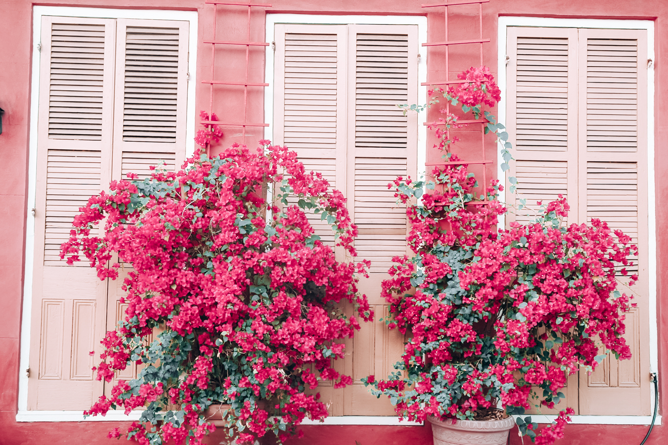 Pink building with flowers in New Orleans