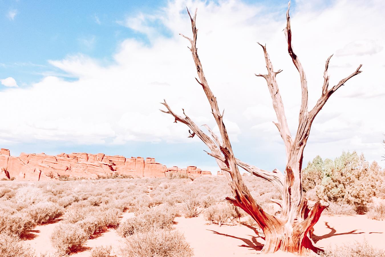 Nature in Utah