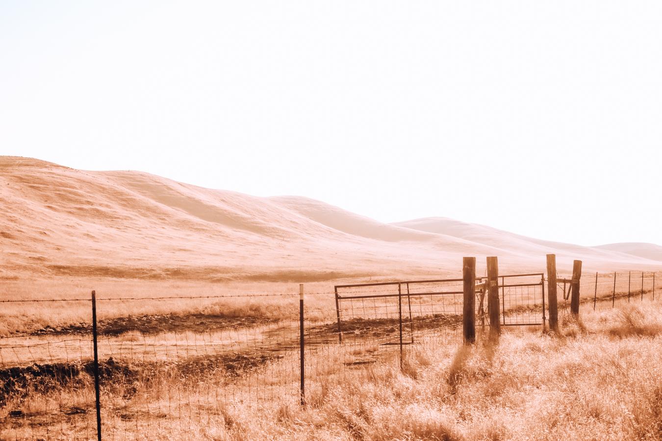 Landscape in Bakersfield