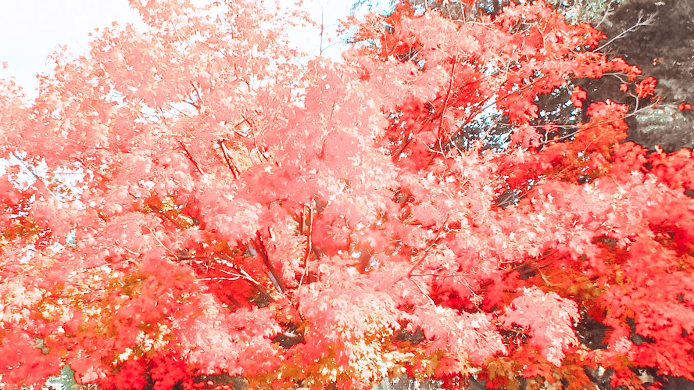 Instagrammable red tree in Boston