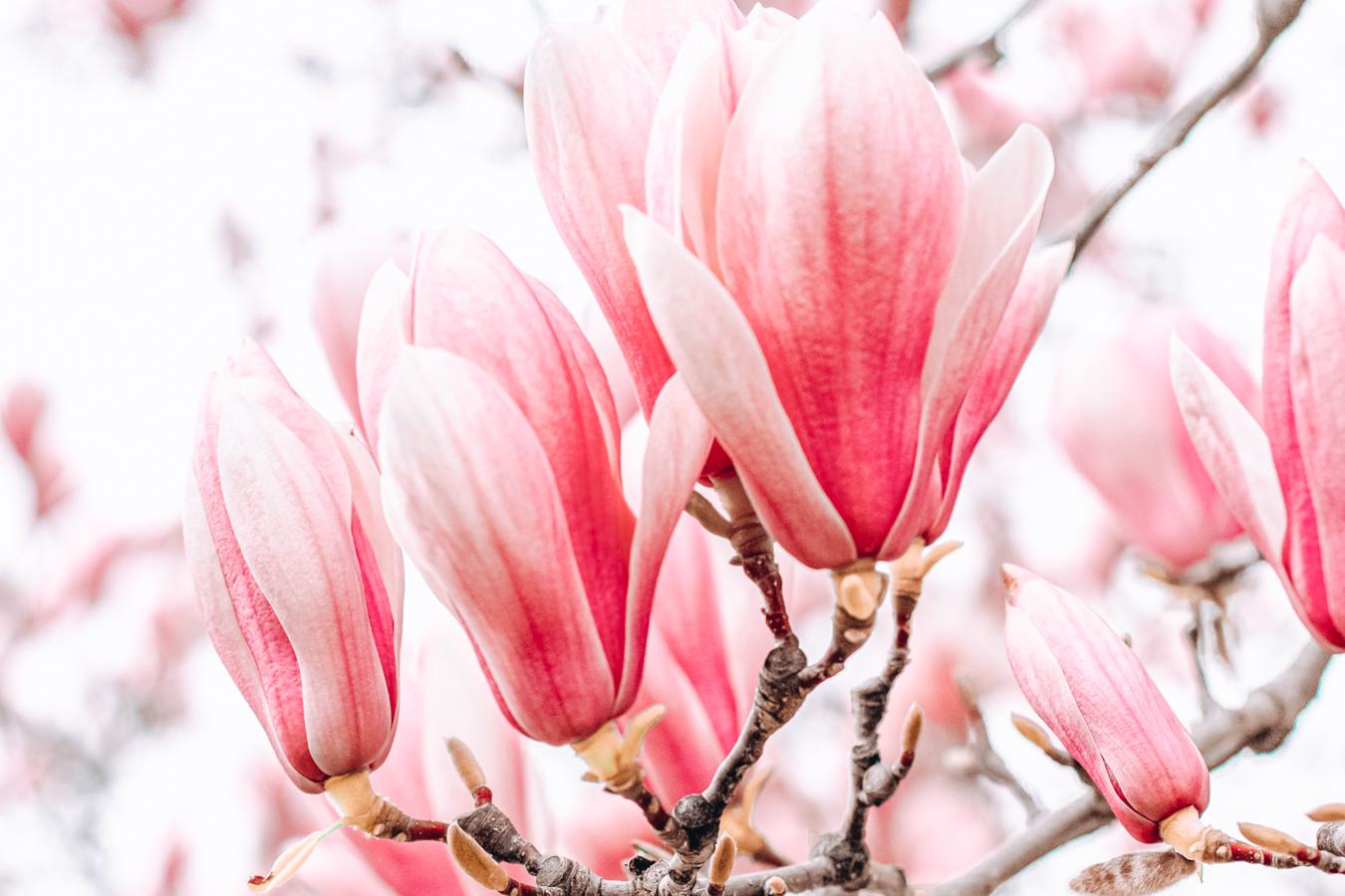Flowers at the Dominion Arboretum