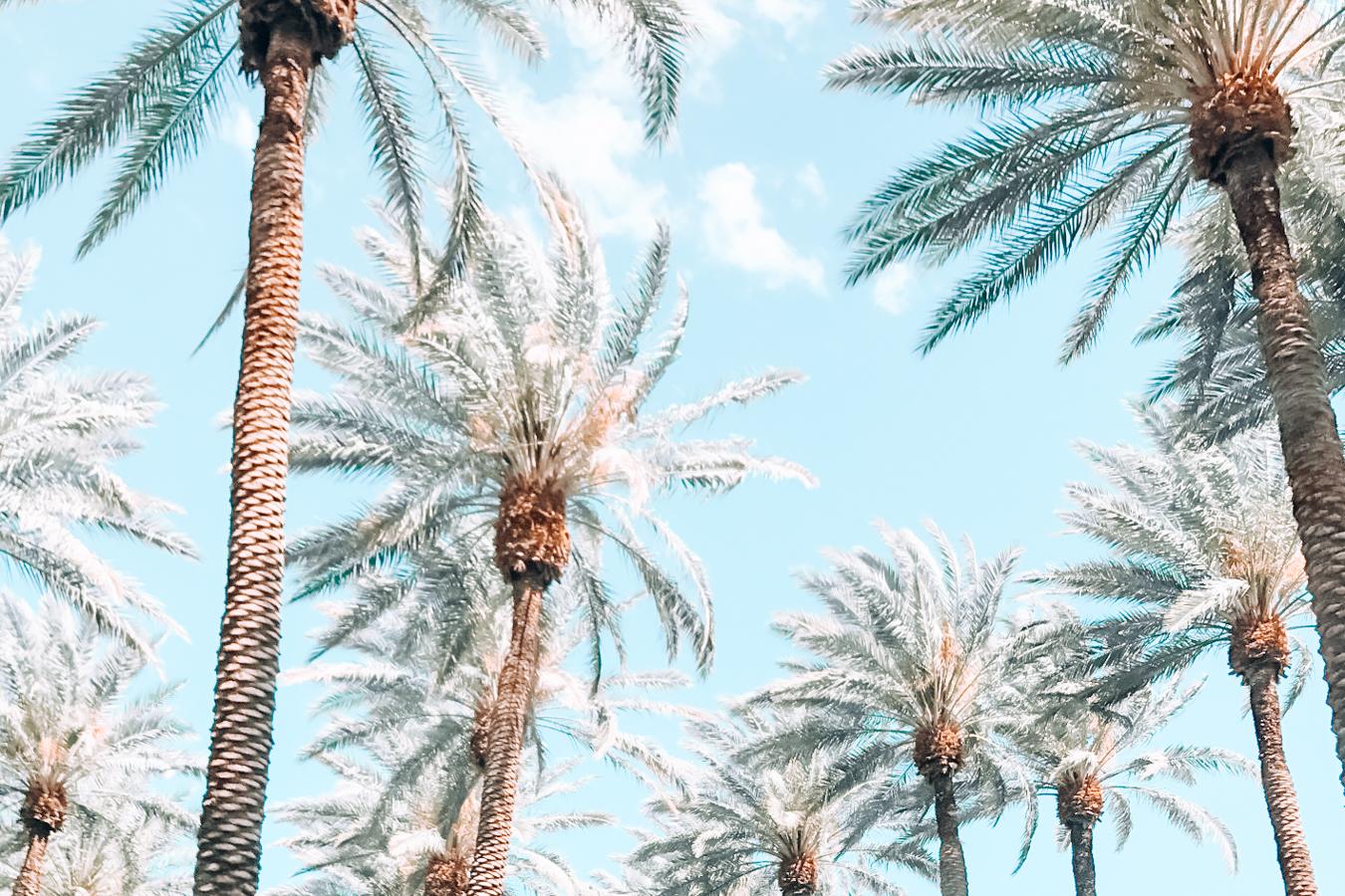 Many palm trees