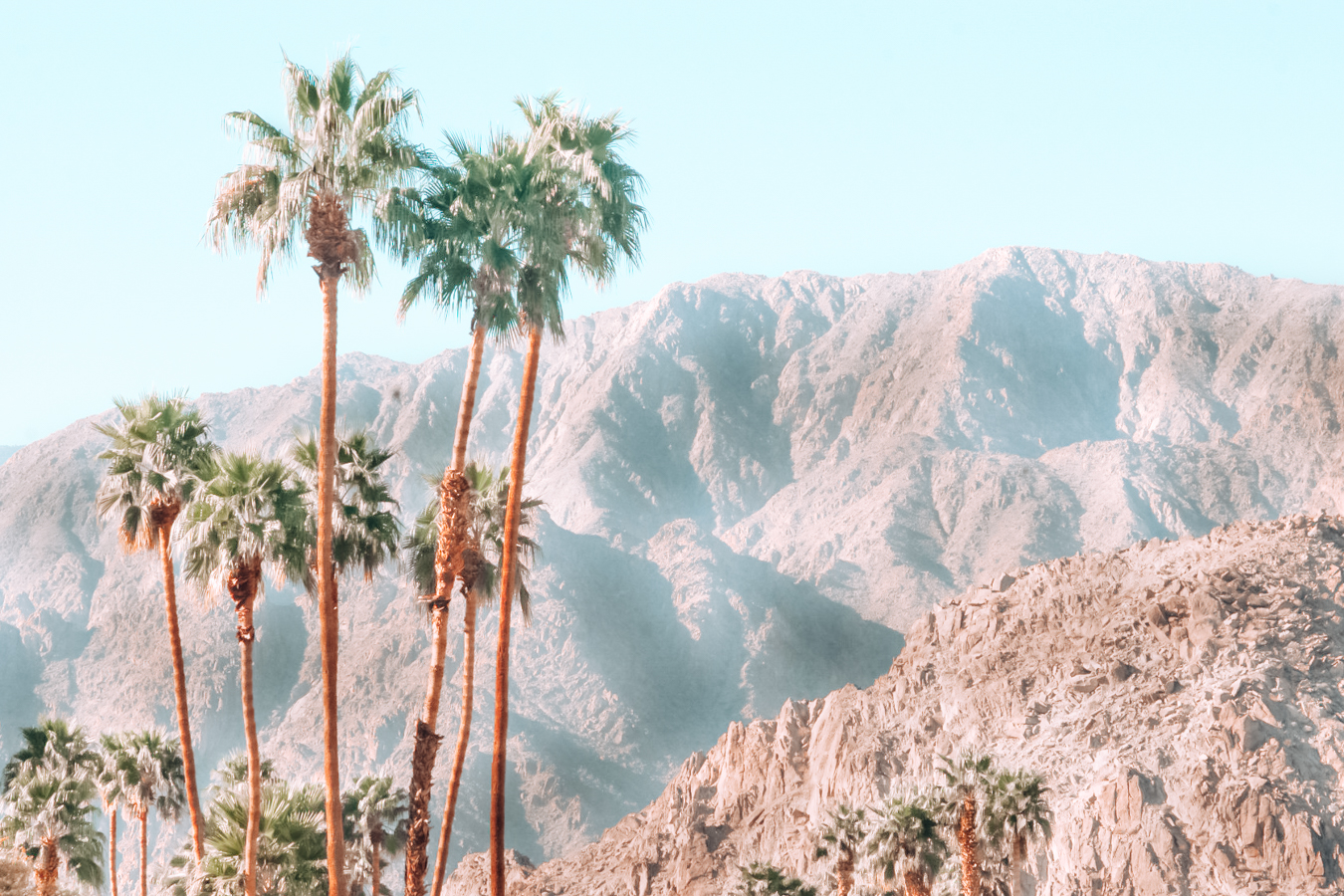 Palm trees and mountain at Palm Springs