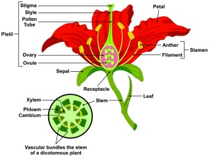 Flower Parts and Functions  DynaGro