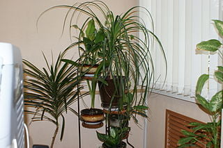 Top 10 Plants for Improving Indoor Air Quality