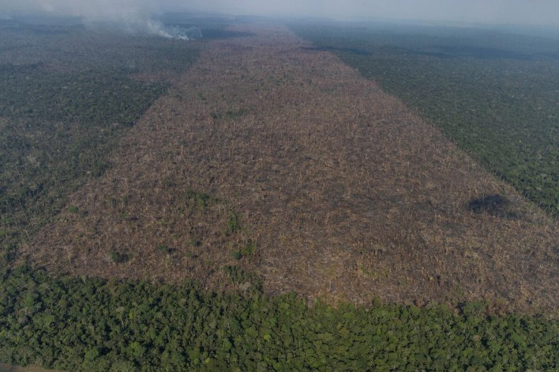 Aerial view from Sept. 15 of an area in the Amazon that Greenpeace says has been deforested for the expansion of livestock, in Lábrea, Amazonas state.
