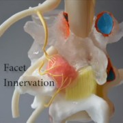 human pain 3d model