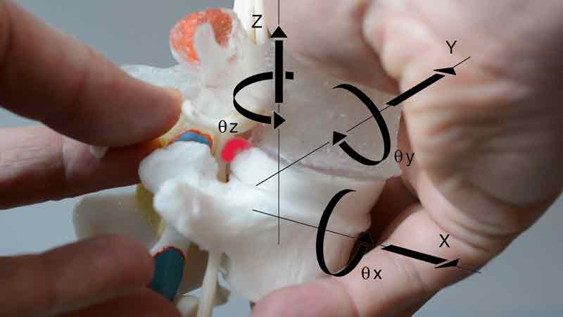 dynamic spine model with spinal cord anatomical model