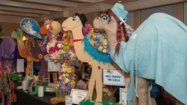 Milton Optimist Club's Camel Race fundraiser returns ...