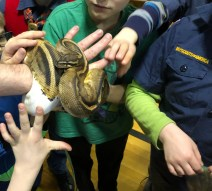 Name that Snake for ReptileFest 2019