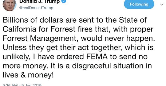 TrumpForrest