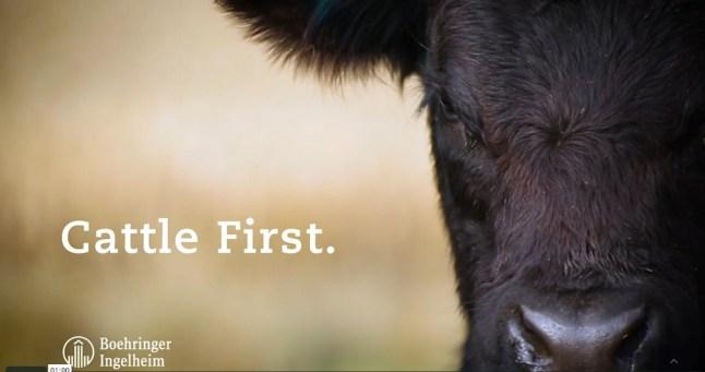 CattleFirst