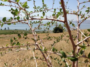 A Grace on the Mount of Beatitudes