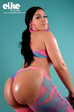 Dynasty Series Spotlight : Elke the Stallion