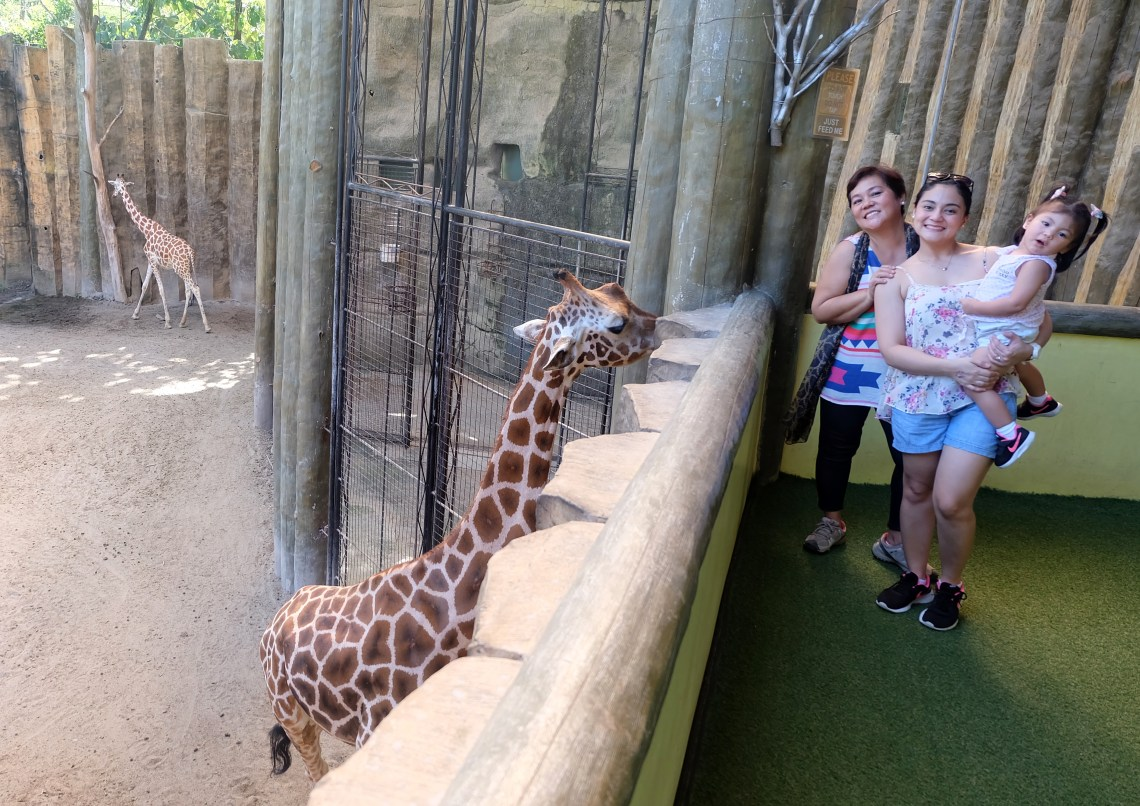 dyosathemomma: Avilon Zoo, why bring kids to the zoo, animals in Avilon zoo