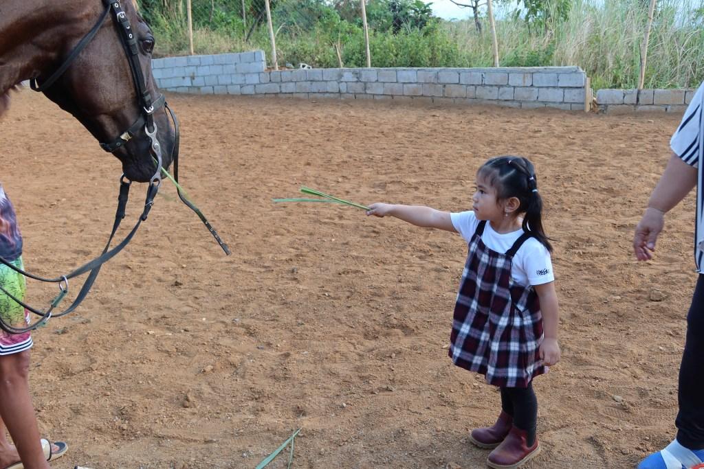 dyosathemomma-UCM-Adventure-Park-horse feeding