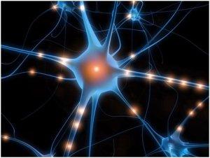 Partez pour un véritable voyage au coeur de votre cerveau !