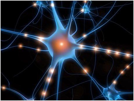 Réparer des circuits cérébraux : futur thérapeutique ?