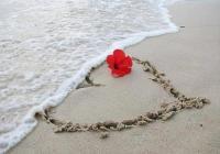 Життя без Любові – квітка без води!