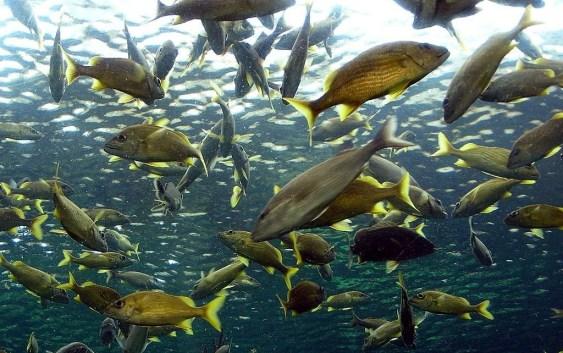 Чому спійманих у сіті риб було саме 153 за євангельською розповіддю?