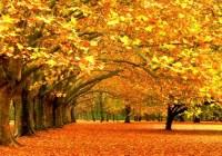Золота осінь Божої Любові