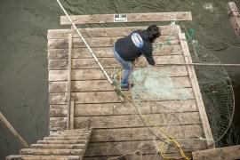 brigham salmon, cascade locks