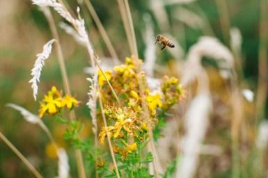 2016_Digital_September_BeeBoom_Eugene_Pavlov_Photograhy157