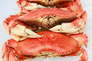 crabbing, astoria