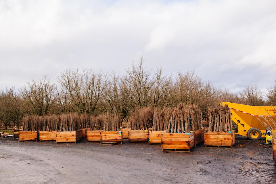 birkemeier farms, hazelnuts