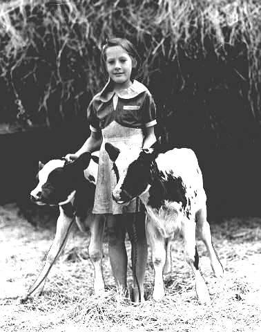 Treva Falk of Halsey, Oregon, with calves in Oregon State Fair competition, 1939