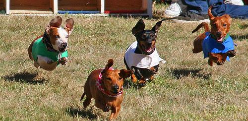 4-dogs-at-full-tilt