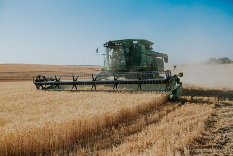The Padget family cutting wheat for harvest.