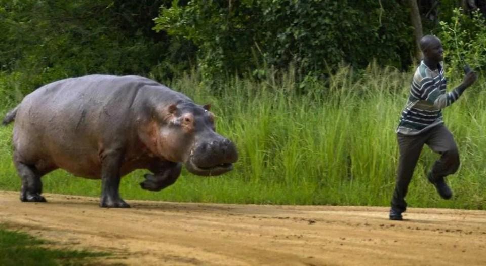 Hippo_Run