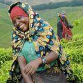 Femmes au champ - Afrique agricole