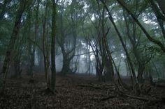 Kirchlengern Forest